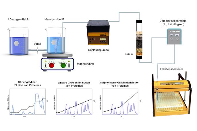 Säulenchromatographie zur Proteinreinigung